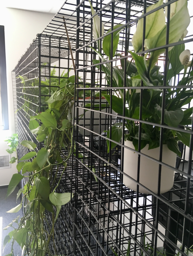 Wired mesh with plants
